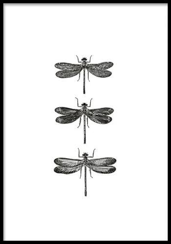 Tavla med svartvita trollsländor. Posters och prints med insekter. Trollslända tavla. www.desenio.se