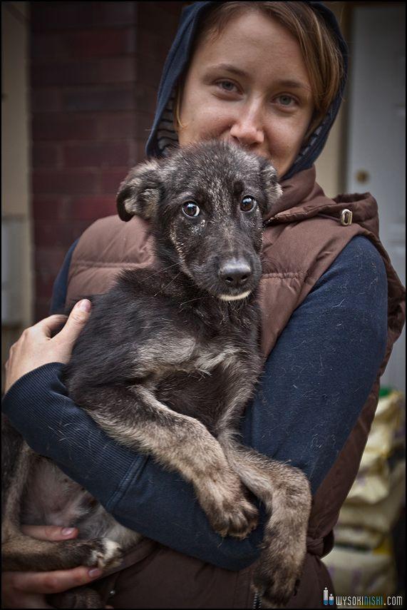 psy zabrane ze schroniska- podopieczni fundacji Psy Niczyje
