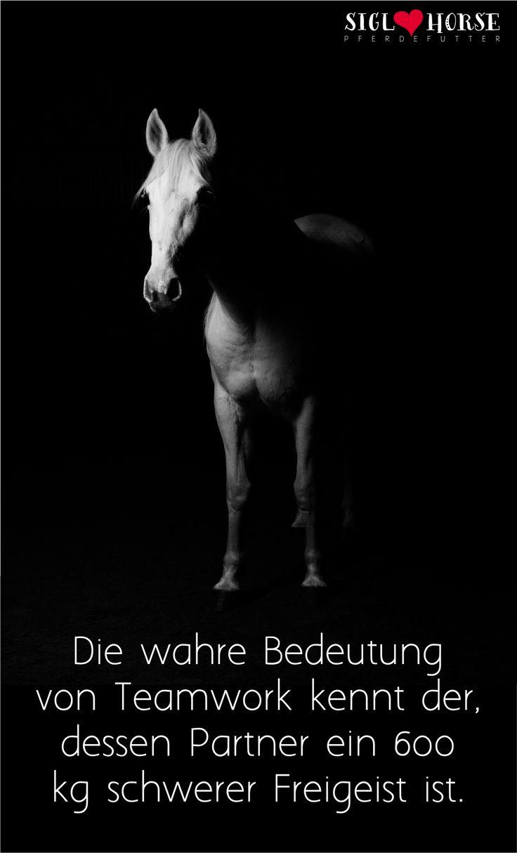 78+ ideas about pferde zitate auf pinterest | reit zitate, pferde