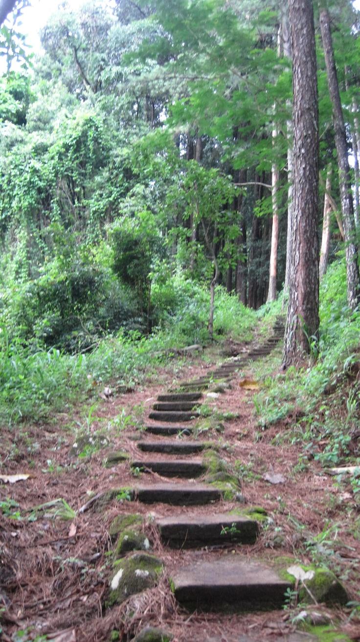 Pathway, Magoebaskloof, Limpopo