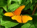 Cape Town - Butterfly World  Daily 9-5. R124.00 per family  The butterfly park is located at the cross roads of the Paarl, Stellenbosch and Wellington Wine Routes, near the small Boland town of Klapmuts. Just off the N1 at Exit 47, on the Route 44 (300m to the south)
