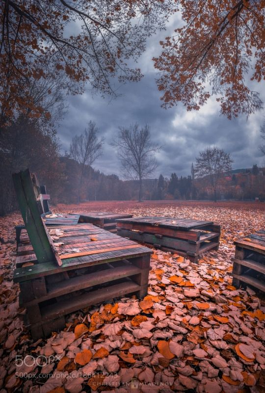 .misty fall in the park