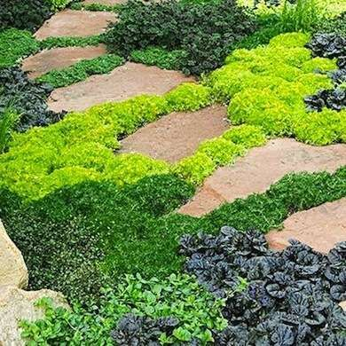 "If you can't decide on a single type of plant, try a <a href=""http://www.bobvila.com/slideshow/no-more-mowing-10-grass-free-alternatives-to-a-traditional-lawn-47640/creeping-jenny-ground-cover#.VVpU7lVVikp"" target=""_blank"">variety of creeping perennials planted together</a>. The cominbations of textures and colors make a beautiful ground cover mosaic."