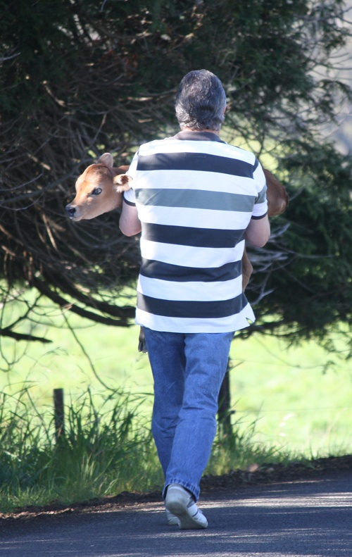 Country wisdom and a love for animals