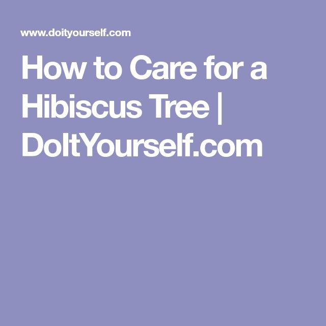 How to Care for a Hibiscus Tree | DoItYourself.com