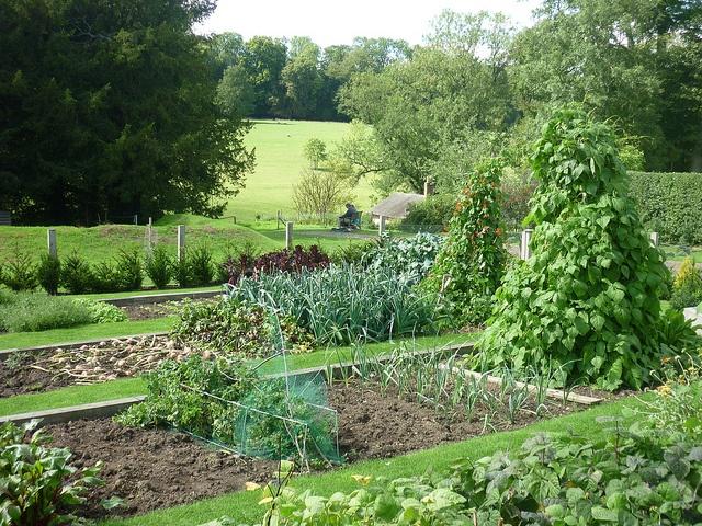 93 best garden planning images on pinterest potager for Planning a fruit and vegetable garden