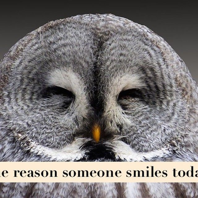 Be the reason someone smiles today. #smile #reason #wildlife #animal #bird #owl