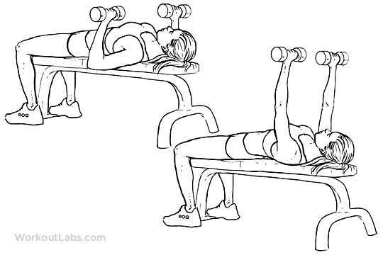 Dumbbell Flat Bench Press * Lie on a flat bench holding a dumbbell in each hand w/ overhand grip. * Hold dumbbells slightly wider than shoulders, palms facing forward. * Bend elbows to 90 degrees & upper arms parallel to ground. * Push the weights up by straightening your arms & moving in an arc to bring dumbbells together. * Hold for a count of one. * Lower dumbbells by bending elbows back to 90 degrees. * Continue lowering arms until they're a little lower than parallel to the floor…