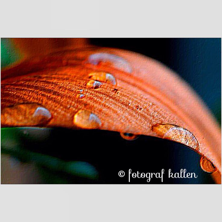 """NOURISHING WATERDROPS"" all rights reserved © fotografkallen.com"