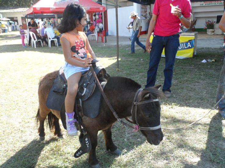 Yegua pony.