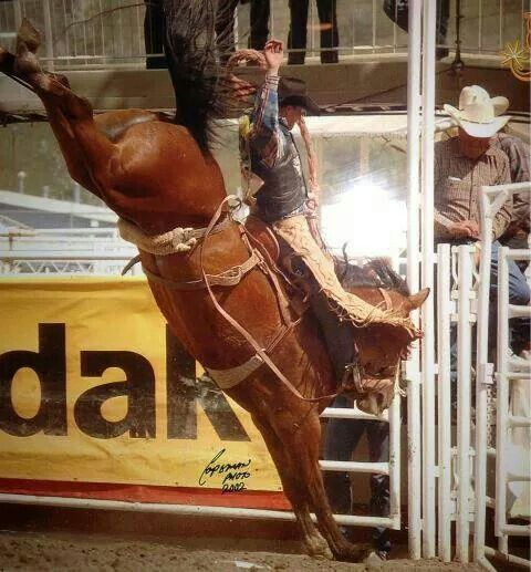 325 Best Images About Rodeo Broncs On Pinterest Montana