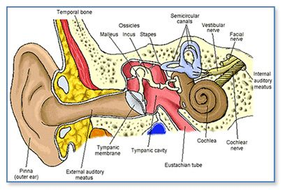 How much do you know about Otosclerosis?