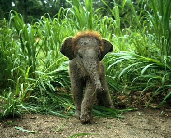 Image detail for -Lovely Pets: cute baby animals - GP11