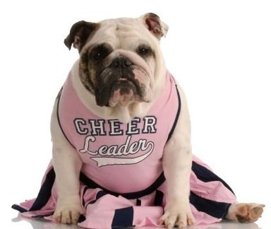 halloween costume dog cheerleader fit amp fab