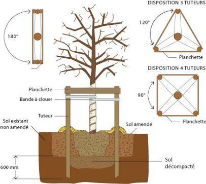 les 25 meilleures id es concernant tuteur arbre sur pinterest faces de l 39 arbre treillis d. Black Bedroom Furniture Sets. Home Design Ideas