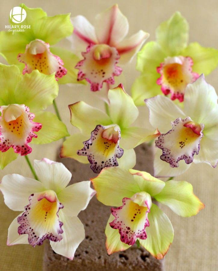 Today was all about dusting the Orchids they look lovely plain white but when colour is added they take on such a different look.