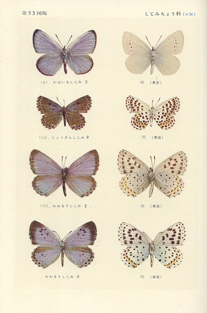 All sizes | papillon 53 | Flickr - Photo Sharing!
