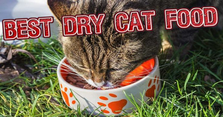 Top 10 Best Dry Cat Food Brands For 2016