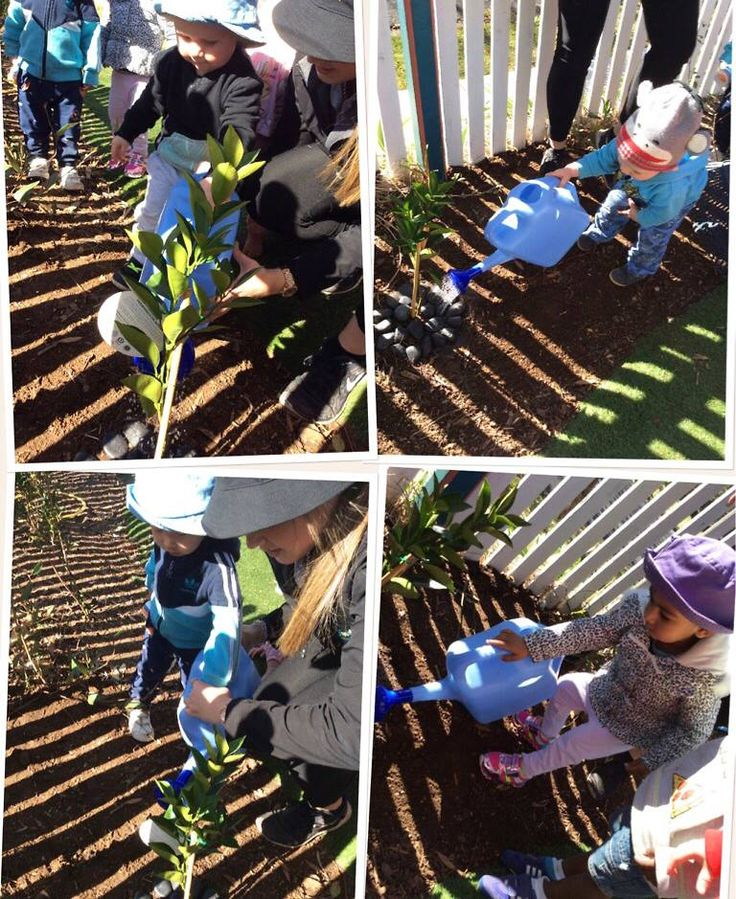 In celebration of National Tree Day, the children suggested we plant fruit trees in the garden. The children planted an orange, mandarin and lemon tree in the garden and we hope that in time, we will be able to pick our own fruit from these trees. We also planted a Waratah, a beautiful Australian Native. All in all, it was a great day in the garden for all involved.