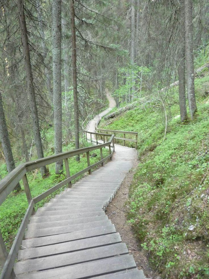 (12/21) Pitkät portaat laskeutuvat Korkeakosken rotkon pohjalle. Kuva: Jussi Laine 1.6.2009.