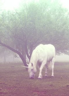 Licorne!!!!