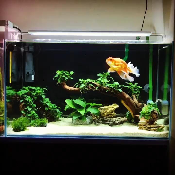 Pin By Salai Soe Linn Kyaw On Paludarium In 2020 Tropical Fish Tanks Fish Tank Themes Small Fish Tanks
