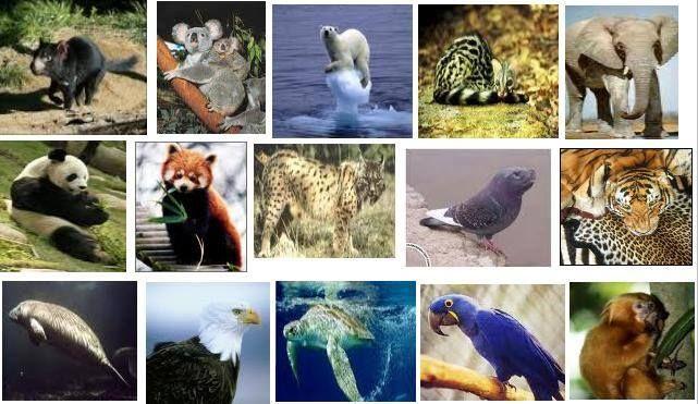 Atualmente, existem no Brasil mais de 120 mil espécies de animais e 40 mil de plantas. Entre os vertebrados, são 713 espécies de mamíferos, 1.900 de aves, 738 de répteis, 934 de anfíbios, 4.774 de peixes e outras 100 mil de animais invertebrados. EU EMO A FAUNA Projeto Educação Ambiental Cinema 4D Chegando até você !