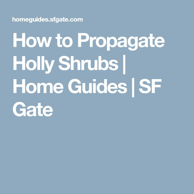 How to Propagate Holly Shrubs | Home Guides | SF Gate