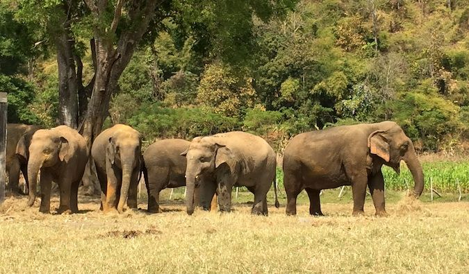 How to Play, Feed, Bathe, and Protect the Elephants in THAILAND