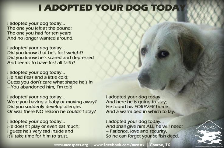 Sad shelter dog poem