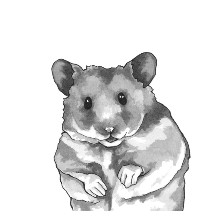 hamster art print matted 8x10