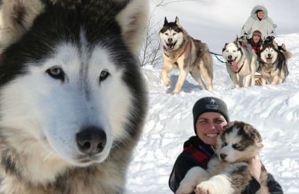 Dog sledding in Quebec was amazing.  The dogs love to play in the snow.  I think I almost got frostbite on my toes, though.  Bundle up!