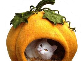 It's a Cinderella Cat! I LOVE this! If I bought it I wish the cat was included with the pumpkin. BeautyBurm Collection on Etsy.