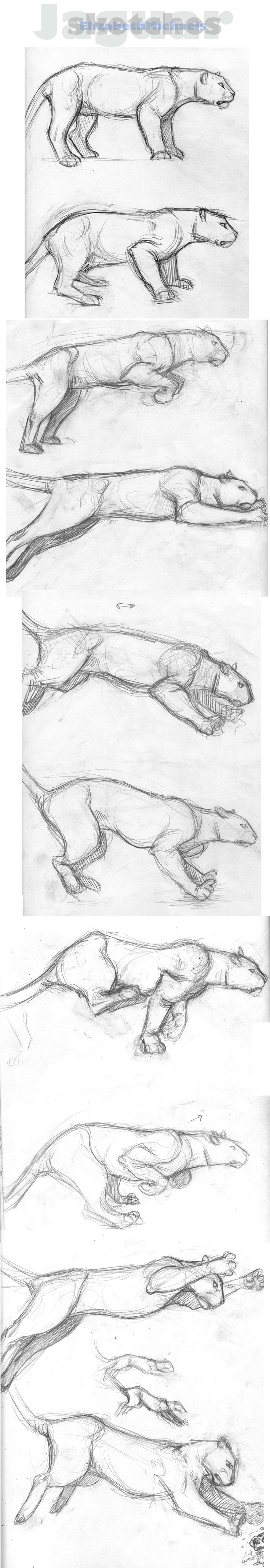 Sketches: Jaguar by ElizabethMichaels.deviantart.com on @deviantART