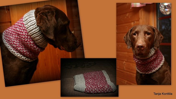 Broken seed stitch cowl for dog