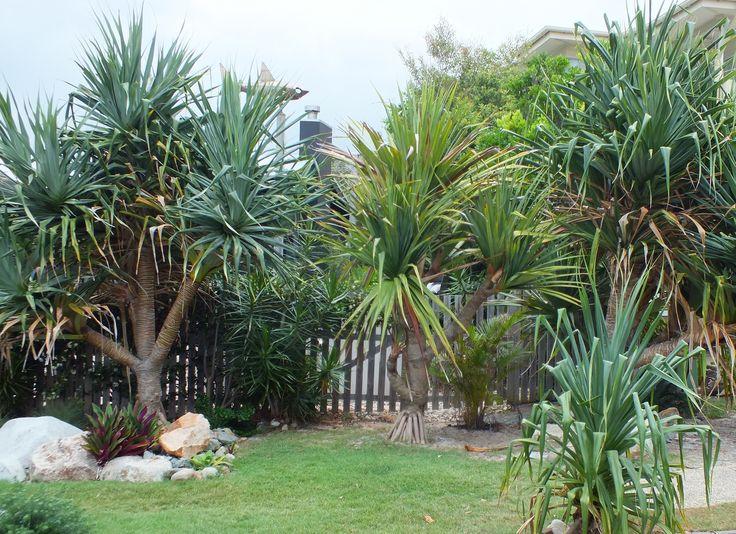 Sunshine Beach garden