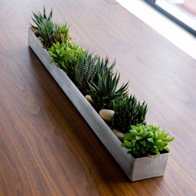 Gus* Modern stainless steel plant trough. Succulents love living in there.