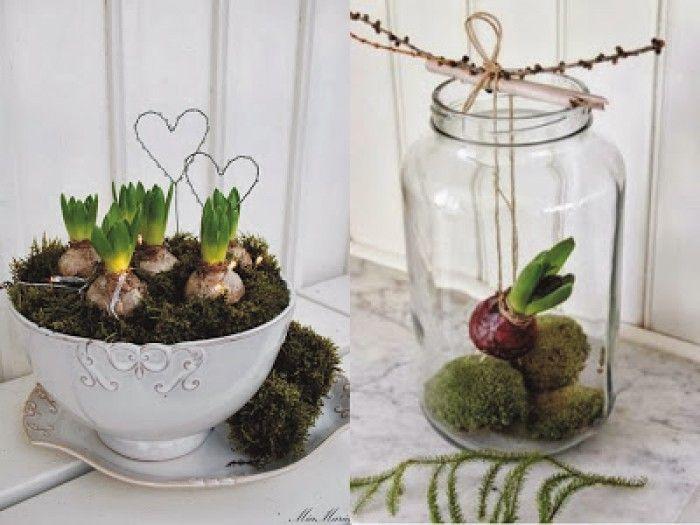 creatief met bloembollen! lente in huis halen....