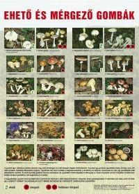 Ehető és mérgező gombák