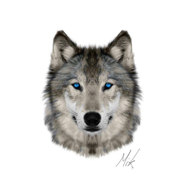 Wolf Face by Mikstyx.deviantart.com on @DeviantArt