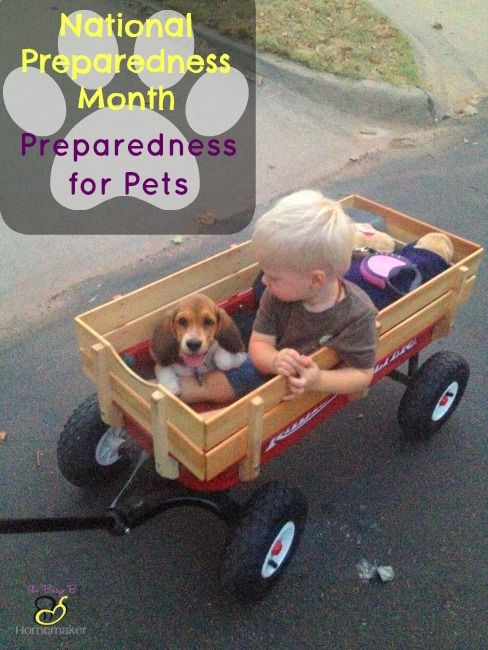 30 Days of Preparedness Challenge: Day 5 -- Preparedness for Pets #30daysofprep