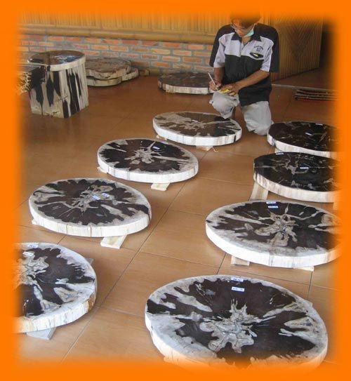 IndoGemstone Petrified Wood Slabs