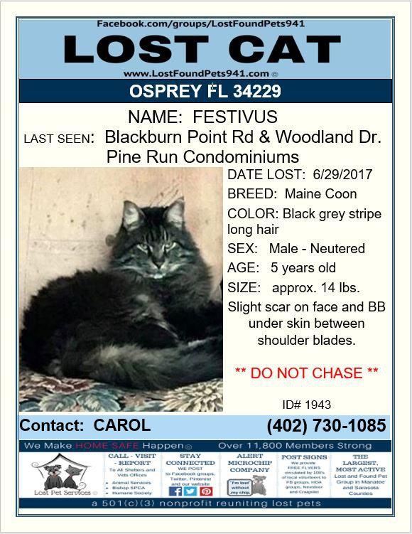 Have you seen Festivus? #Lost #cat #Mainecoon #missing #pets #Osprey FL 34229 #LostFoundPets941 #LostPetServices