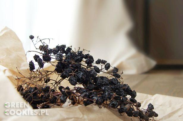 owoce czarnego bzu suszone