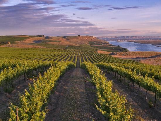 Hopefully an upcoming vacation destination.  Tri Cities, WA in the Columbia River Valley.  Wine country!