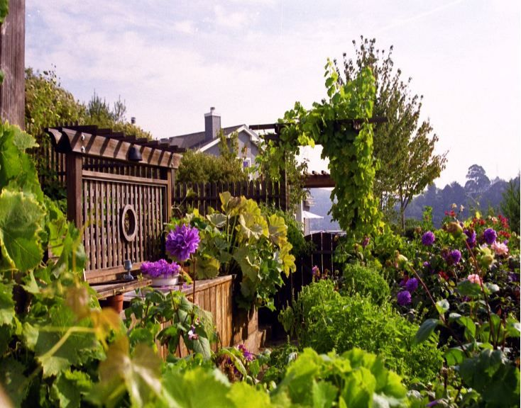 Garden Porn: A steep hillside vegetable garden terraced in Marin. See actual plan drawing for hill south of house