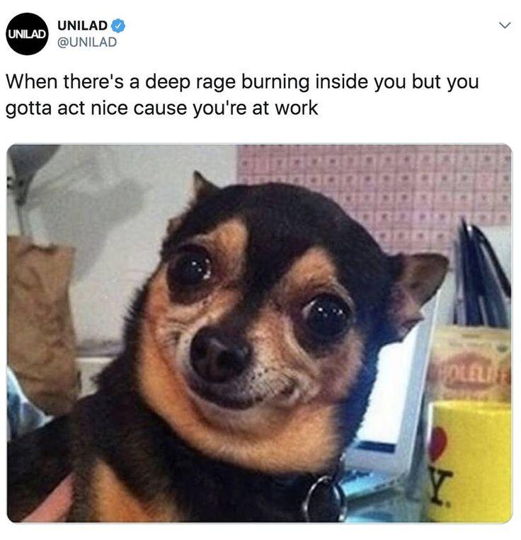 100 chihuahua memes thatll make you laugh harder than you