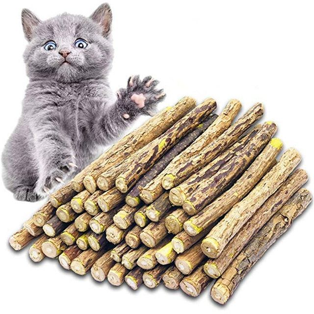 Cat Cleaning Teeth Pure Natural Catnip Pet Cat Molar Toothpaste Stick Matatabi Actinidia Fruit Silvervine Cat Snac Kitten Cleaning Dental Treats Teeth Cleaning