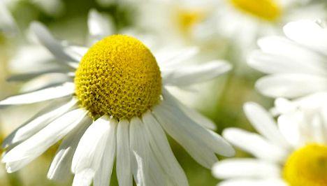 A legerősebb emésztést serkentő 12 gyógynövény - Egészség | Femina