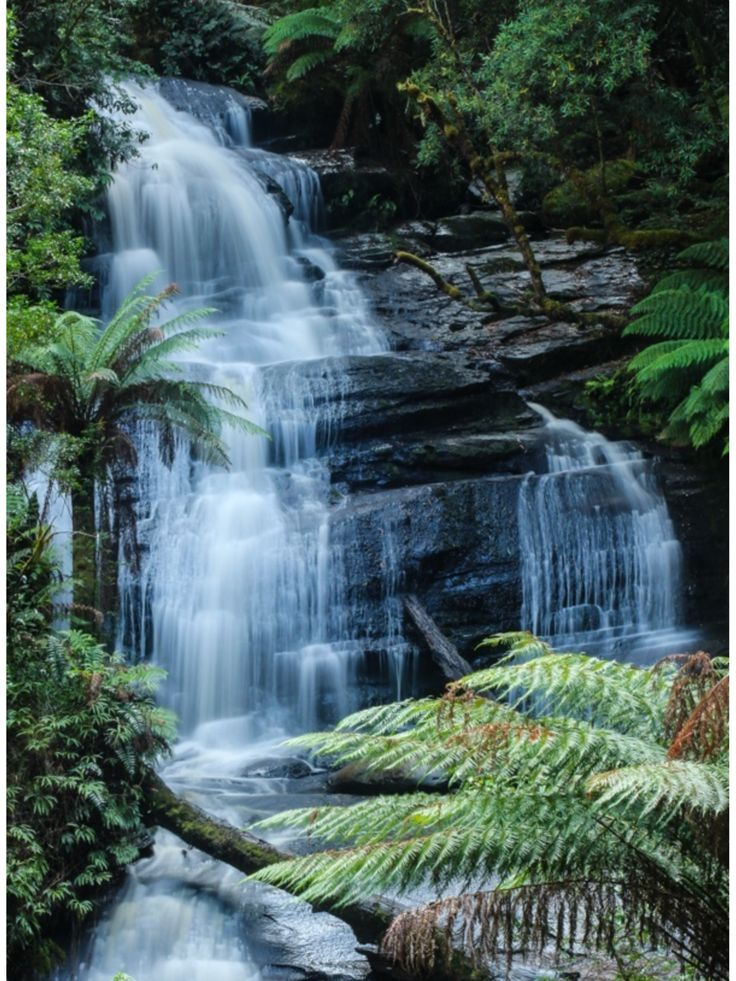 Triplet Falls -- Otways NP.  Immerse yourself in an ancient land. Walk among tall trees & giant tree ferns, & discover beautiful waterfalls | ytravelblog.com
